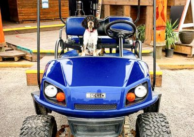 gallery - Dog Blue Cart